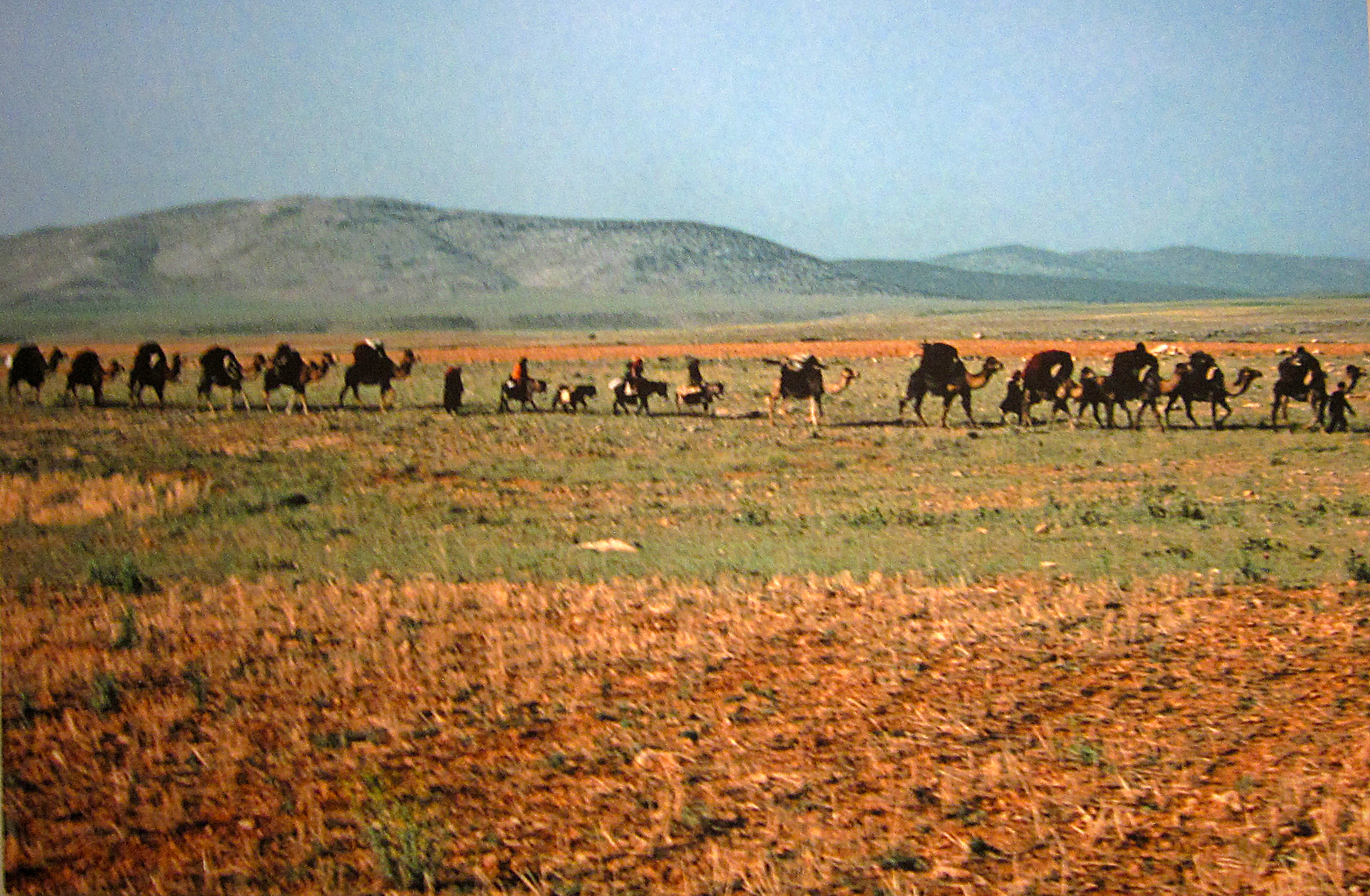 Nomad Migration
