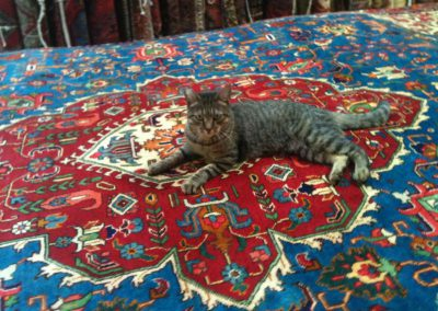 cat relaxing on large area rug