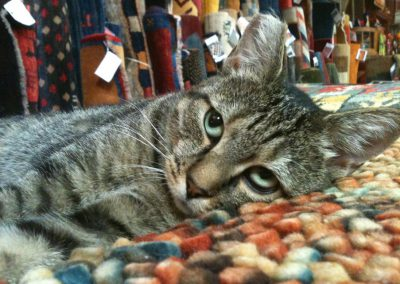 cats love hand-knotted oriental rugs