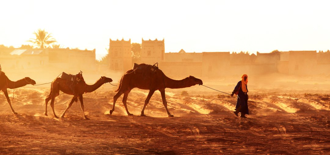 Camels Carrying Nomads and their Rugs